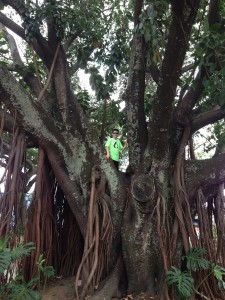 photo of Jack in a tree in San Jose, Costa Rica